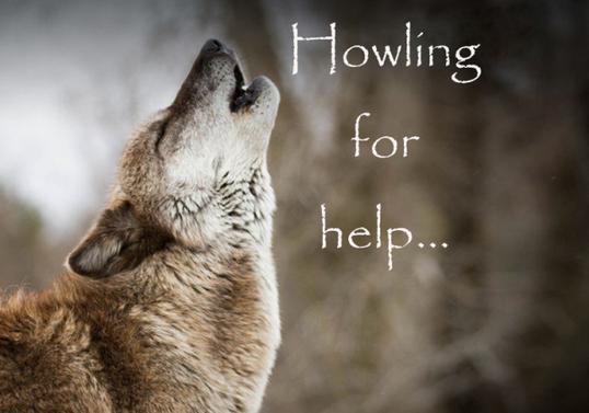 Wolf-HowlingForHelp